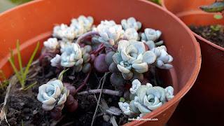 El cuidado de plantas en macetas